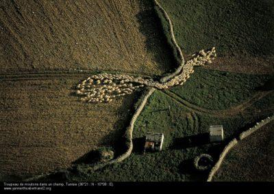 Troupeau de moutons dans un champ