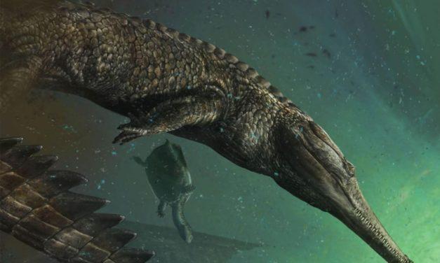 Un fossile de crocodile géant mis au jour en Tunisie