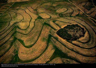 Agriculture près de la ville de Hammamet