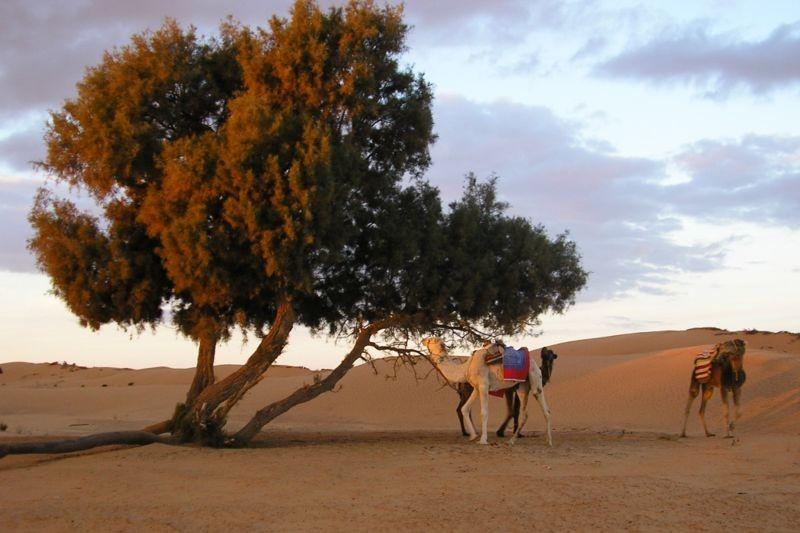 Aux abords de l'oasis de Ksar Ghilane, dans le désert de Tunisie