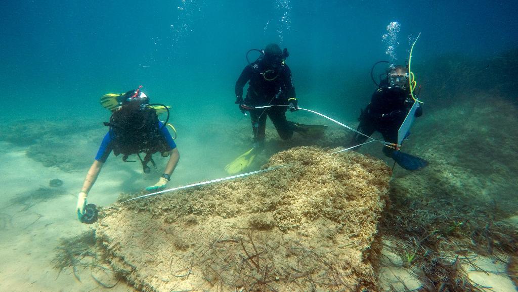 Néapolis : une cité romaine découverte sous la mer près de Nabeul